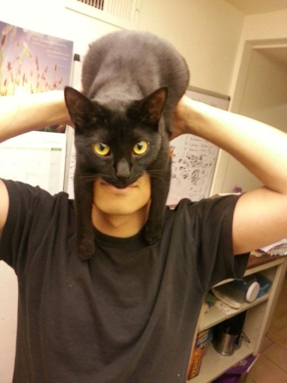 cat-batman